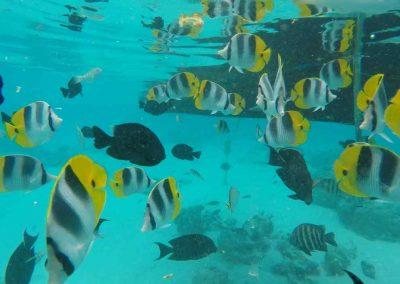 GOPR1419 moi avec poisson2s
